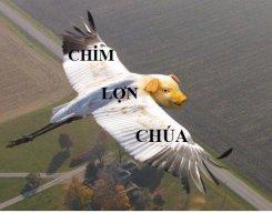 ChienbinhCK5