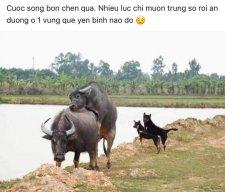 NguyendachaDHA