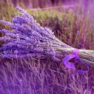 lavender99